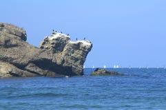 Kustklip en het varen regatta royalty-vrije stock afbeelding