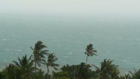 Kustlandschap tijdens natuurrampenorkaan De sterke cycloonwind slingert kokosnotenpalmen Zwaar tropisch onweer