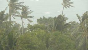 Kustlandschap tijdens natuurrampenorkaan De sterke cycloonwind slingert kokosnotenpalmen Zwaar tropisch onweer stock footage