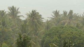 Kustlandschap tijdens natuurrampenorkaan De sterke cycloonwind slingert kokosnotenpalmen Zwaar tropisch onweer stock videobeelden