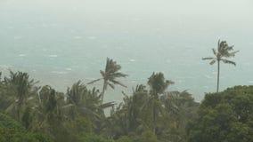 Kustlandschap tijdens natuurrampenorkaan De sterke cycloonwind slingert kokosnotenpalmen Zwaar tropisch onweer stock video