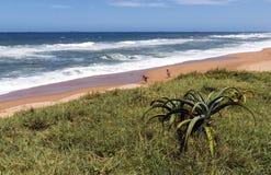 Kustlandschap in Umdloti-Strand in Durban Zuid-Afrika royalty-vrije stock afbeeldingen