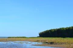 kustlijn Royalty-vrije Stock Fotografie