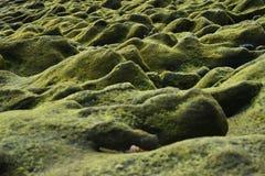 Kustlijn bij Papuma-strand Stock Foto's