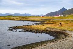 Kustlijn dichtbij ringsweg van IJsland royalty-vrije stock afbeeldingen