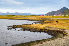 Kustlijn dichtbij ringsweg van IJsland royalty-vrije stock foto