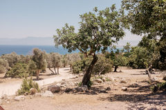 Kustlijn en bomen Cyprus Stock Foto