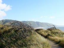 Kustlijn gang-ii-nieuw Zeeland Stock Fotografie