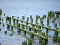 Kustlijn van de rivier van Colombia Stock Foto's