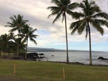 Kustlinje med palmträd Arkivfoton