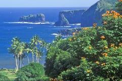 Kustlinje med palmträd och blommor, Maui, Hawaii Royaltyfria Bilder