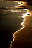 kustlinje monterey Fotografering för Bildbyråer