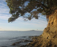 kustlinje New Zealand Royaltyfri Fotografi