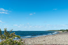 Kustlinje på den svenska ön Oland Royaltyfri Bild