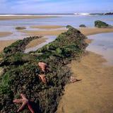 kustoregon shoreline Arkivfoton