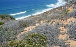 Kustsage community in het Dana Point Headlands Conservation-gebied stock afbeelding