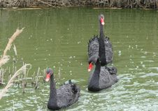 Kuststad van het gebied van Berdyansk Zaporozhye De exotische vogels en de dieren van de lokale dierentuin rusten vreedzaam voor  Stock Afbeeldingen