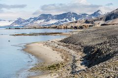 Kuststrand in Spitsbergen, Noordpool Royalty-vrije Stock Foto's