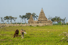 Kusttempel av Mahabalipuram, Indien Arkivbild