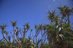 Kustväxten av ön Royaltyfria Bilder