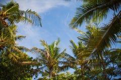 Kuta Beach palms Stock Photos