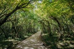 Kutaisi, Geórgia Hortaliças de Forest Road Lane Pathway Among no estado imagens de stock royalty free
