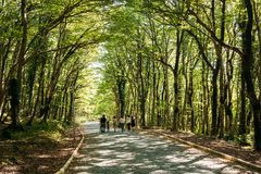 Kutaisi Georgia Folk som går på Forest Road Lane Pathway Among royaltyfri fotografi