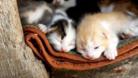 Kute kleine kittens rusten overdag, ze sluiten gezichten met gesloten ogen, moederkat ligt achter hen en kijkt stock video