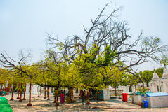 Kuthodaw塔在曼德勒,缅甸 缅甸 库存图片
