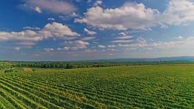 Kutjevo vineyards aerial stock video footage