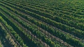 Kutjevo vineyards aerial stock video