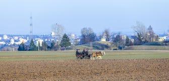Kutscher mit Pferdezug und die Skyline von Frankfurt Lizenzfreie Stockfotos