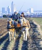 Kutscher mit Pferdezug und die Skyline von Frankfurt Lizenzfreies Stockbild