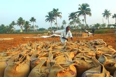 Kuttanadu,Kerala. Stock Image