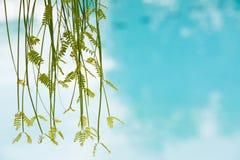 Kuuroord en wellnessconcept Stock Fotografie
