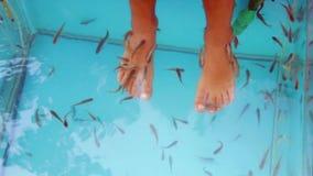 Kuuroord met vissen Garra Rufa doet de pedicure Babyvoeten in een aquarium met vissen stock footage