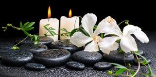 Kuuroordconcept bloeiende witte hibiscus, takje met rankpassio Royalty-vrije Stock Foto's
