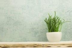 Kuuroordconcept met gras in kom op grijze achtergrond Royalty-vrije Stock Afbeelding