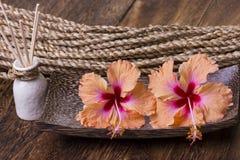Kuuroordconcept met hibiscusbloem Stock Afbeeldingen