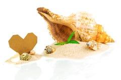 Kuuroordconcept met zeeschelpen en bamboe met hartvorm van kaart stock afbeelding