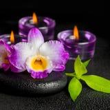 Kuuroordconcept purpere orchideedendrobium, takjebamboe met dauw royalty-vrije stock afbeeldingen