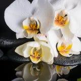 Kuuroordconcept witte orchidee (phalaenopsis), zen stenen met daling Royalty-vrije Stock Foto