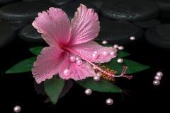 Kuuroordgezondheidszorg van roze hibiscusbloem op groen blad met dalingen Stock Fotografie