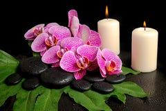 kuuroordreeks zenstenen met dalingen, bloeiend takje van orchidee Stock Foto