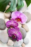 Kuuroordstenen met orchideeën royalty-vrije stock afbeeldingen