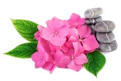 Kuuroordstenen zen met roze bloemen royalty-vrije stock foto's