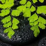 Kuuroordstilleven van groene tak maidenhair en zwarte zenstenen Stock Foto