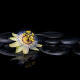 Kuuroordstilleven van passiebloembloem op zenstenen met reflectio Stock Afbeeldingen