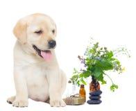 Kuuroordvoorwerpen en Labrador stock afbeelding