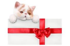 Kuvert med den röda pilbågen och en kattunge Royaltyfri Fotografi